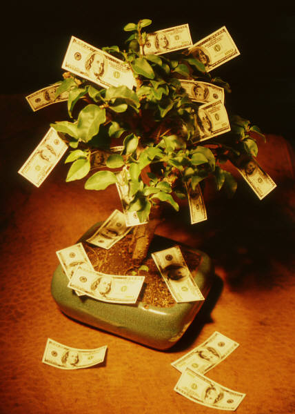 image of a tree with money attached to it