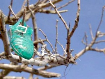 photo of a green plastic sandal in a tree